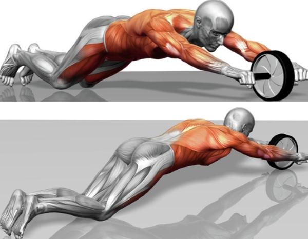 Мышцы, работающие при занятиях с колесом